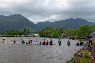Community members corralled the fish in the Waikalua Fishpond