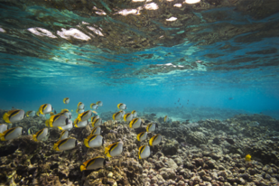 Underwater image of corals with fish swimming above them