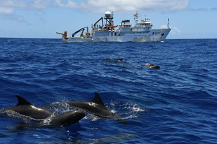 Ship with melon-headed whales in foreground