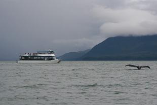 750x500 Whale Watching Juneau.jpg
