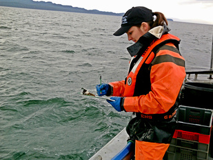 Southeast_Alaska_Coastal_Monitoring.jpg