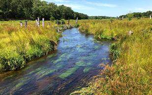 1280x800-Turek-Coonamessett-River-Wetland-Restoration-Falmouth-MA.jpg