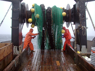 pulling up a net on a vessel