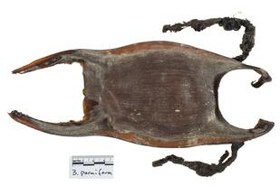 Alaska-skate-egg-case-2477.jpg