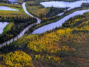 Fall color in the Alaska tundra.
