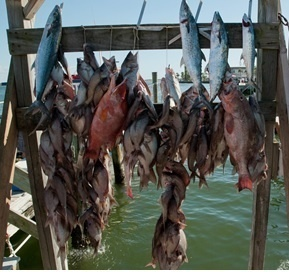 Gulf-fish-headboat-catch-display.jpg