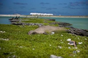 2300x1536_monk_seal_Southeast_Island.jpg