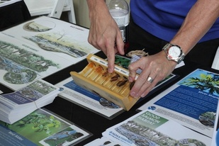 Salmonid development display during NOAA Day at the Aquarium of the Pacific