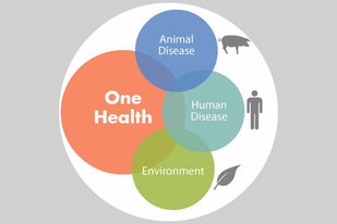 Graphic showing the overlap of Animal Disease, Human Disease, and Environment as components of One Health