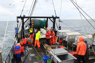 sorting the catch during the NEAMAP inshore trawl survey