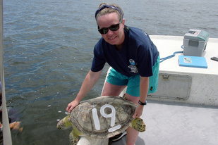 Barbara Schroeder with a sea turtle in Florida Bay.