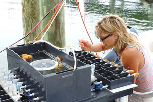 woman sitting on dock conducting experiment on clams