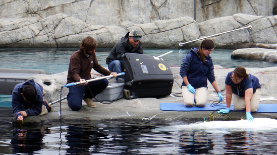 Scientists deploying instruments to measure ocean noise