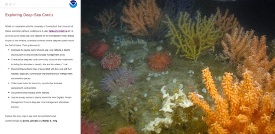 Deep-sea coral storymap Gulf of Maine Cover