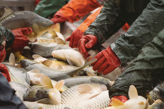 Seafood Commerce & Certification | NOAA Fisheries