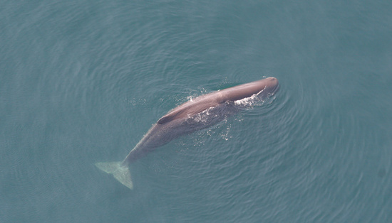 Regret, but facts about sperm whales