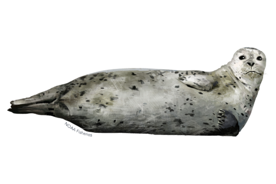 640x427-harbor-seal.png