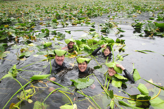 Veterans complete a snorkel survey study of juvenile salmon and salmon eggs under lily pads.