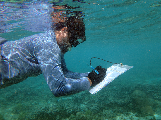 A NOAA scientist assessing coral damage on Long Reef