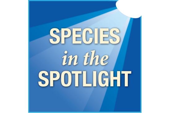 801x534-species-in-spotlight-logo-OPR.png