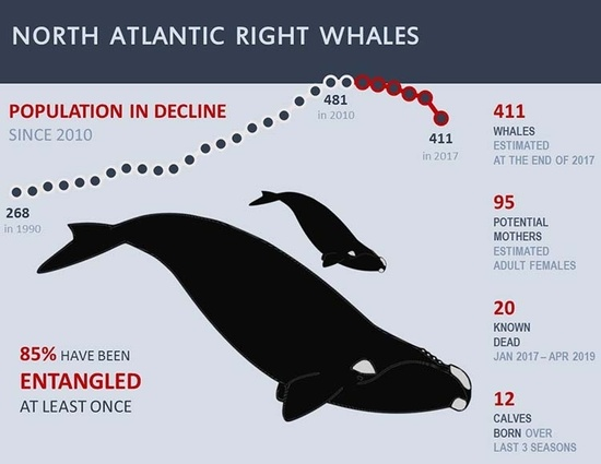 Right-whale-infographic-2019_updated.jpg