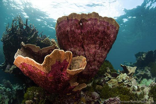 Giant Montipora coral.