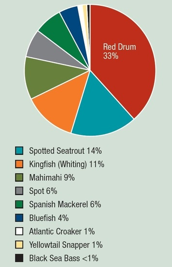 South Atlantic fact sheet fish caught pie chart Red Drum 33% Spotted Seatrout 14% Kingfish (Whiting) 11% Mahimahi 9% Spot 6% Spanish Mackerel 6% Bluefish 4% Atlantic Croaker 1% Yellowtail Snapper 1% Black Sea Bass <1%