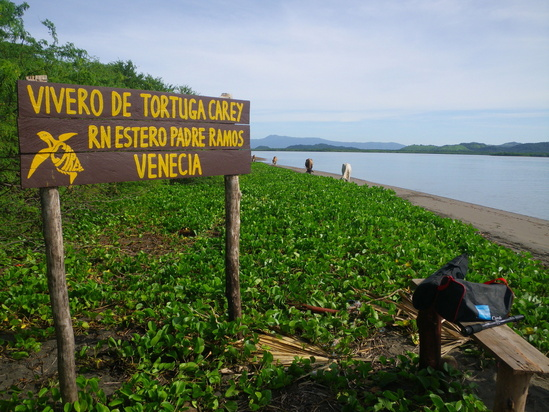 Shoreline near a hawksbill nursery for protecting eggs in Estero Padre Ramos, Nicaragua – notice the mangrove-lined shores in the background. Photo: JA Seminoff