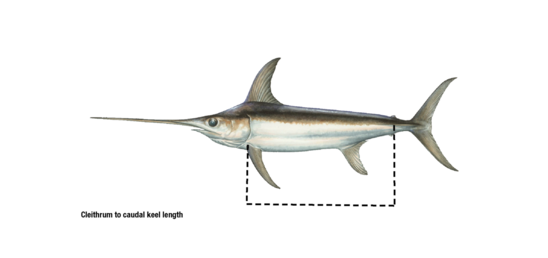 Cleithrum to caudal keel length.png
