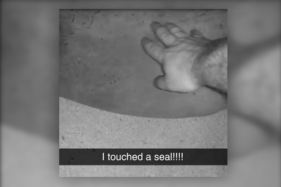 A person touch/harassing a Hawaiian monk seal with his/her hand.