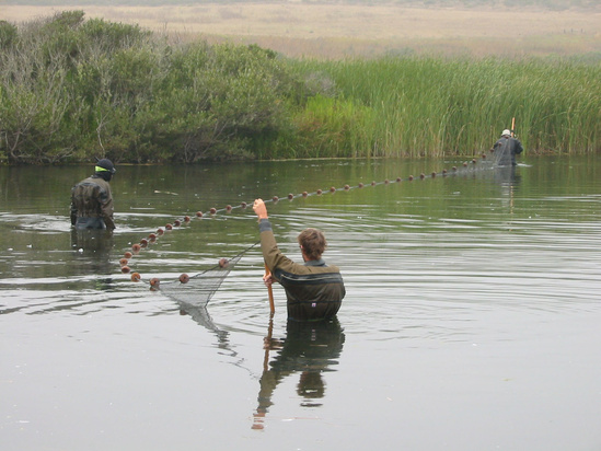 Three researchers spread a net across a coastal lagoon.