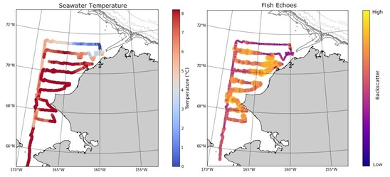 Temperature (left) and backscatter (right) during the July-August survey of the Chukchi Sea.  Fish appeared to be less abundant in areas with temperatures near or less than 4°C (cool colors).