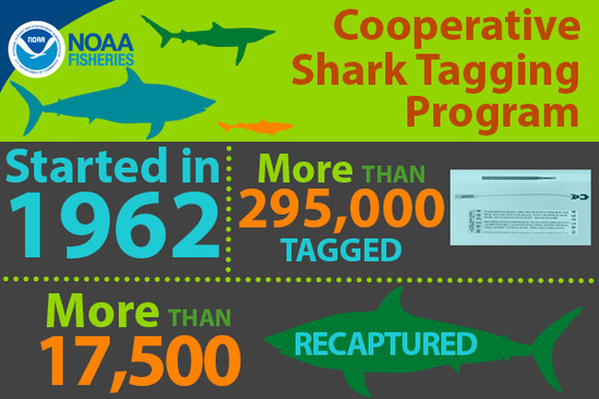 NOAA Fishereis Cooperative Shark Tagging Program infographic, started in 1962, more tha 295,000 tagged, more than 17,500 recaptured.