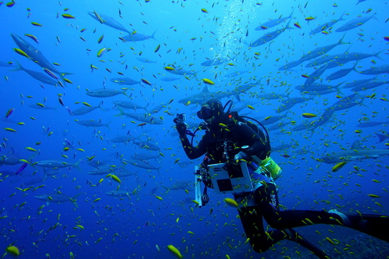 Diver conducts reef fish survey