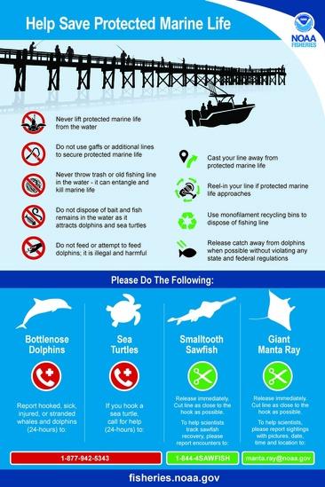 Dolphin_SeaTurtle_Sawfish_Manta_sign.jpg