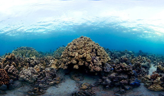 Underwater photo of West Hawai'i's vibrant coral reef ecosystem.