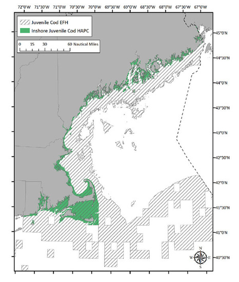 juvenile-cod-EFH-map_smaller.jpg