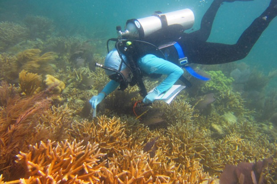 Super thicket of staghorn coral in Dry Tourtugas.