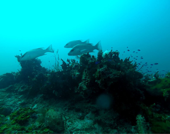 ROV images of reef activity