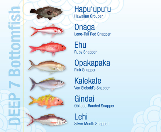 Chart showing illustrations and names of all Hawaii deep 7 bottomfish.