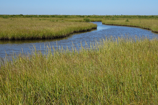 A waterway winds through dense marsh vegetation