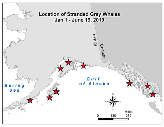Map indicating locations where dead gray whales have been found in Alaska.