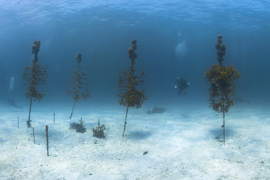 a diver swims underwater among corals