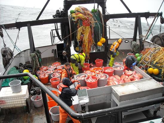 sorting-fish-on-excalibur-deck.jpg