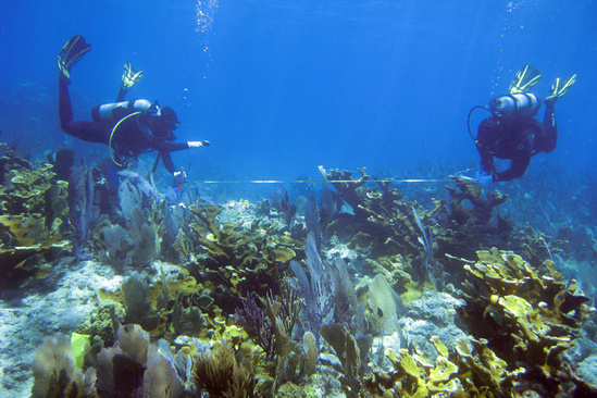 Research divers measuring coral reef