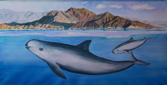 Painting of Vaquita, cow/calf pair, swimming near San Felipe, BC, Mexico. Artist: Barbara Taylor
