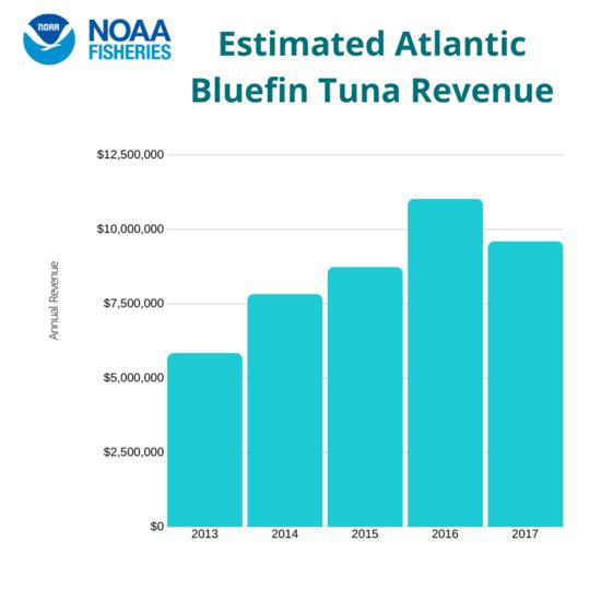 Estimated Atlantic Bluefin Tuna Revenue.png.png