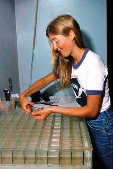 Renee examines planktonic lobster larvae in a lab room.