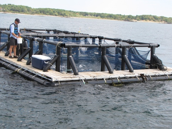 Man standing aquaculture pen for fish.