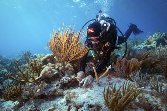 Restoring and Protecting Marine Habitat
